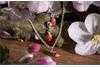 Schmuckset Kleine Krabbelei 925  silber Schmuckset Kette mit Anhänger und Ohrstecker