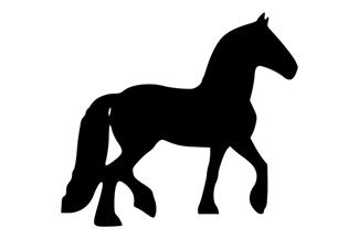 C14 Pferd