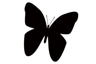 C18 Schmetterling